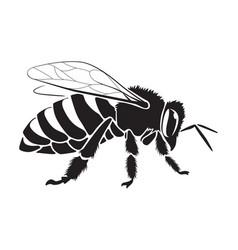 Graphic bee vector