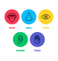 Icon set of five human senses vector