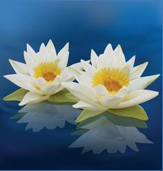 Water lilies vector