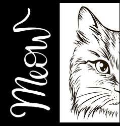 beautiful cat word meow vector image