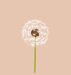 Dandelion - vector