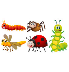 Different types of bugs on white background vector