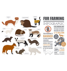 Fur farming infographic template flat design vector