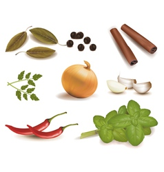 Group spices vector