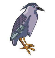 Night heron or nycticorax sp vector