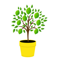 Young green lemons yellow pot tree lime with vector
