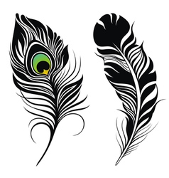 Feathers vector image