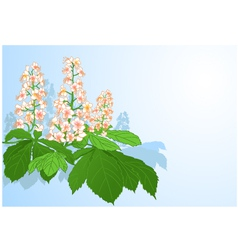 Background with chestnut flowers vector image
