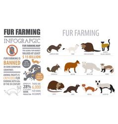 Fur farming infographic template flat design vector