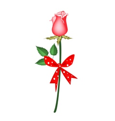 A Lovely Red Rose with Red Ribbon vector image