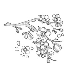cherry blossom coloring book vector image