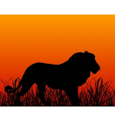 Sunset in savanna with lion vector image