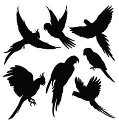 parrots amazon jungle birds silhouettes vector image vector image
