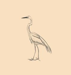 heron is a sketch hand vector image vector image