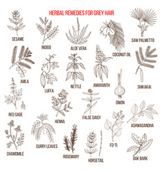Best herbal remedies for gray hair vector