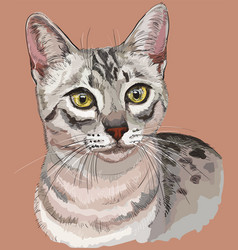 Colorful egyptian mau cat vector