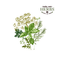 hand drawn background with herbs vector image