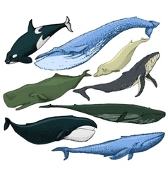 Set of hand drawn whales vector image