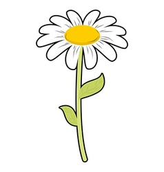 Chamomile field flower White petals and green stem vector image