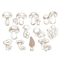 Edible mushrooms sketch drawing icons vector image