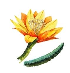 Watercolor pataya dragon flower vector