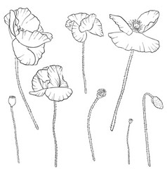 Set of drawing poppy flowers vector