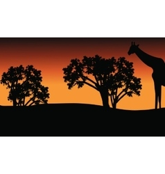 Silhouette of giraffe and trees on safari vector