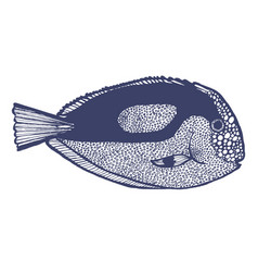 Surgeonfish in hand drawn style vector