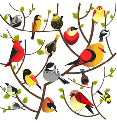 birds sitting on tree branch flat different vector image