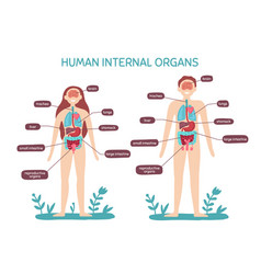 cartoon human body anatomy male and female vector image