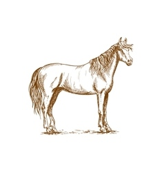 Horse standing with head turned vector image vector image
