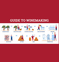 Infographic guide to winemaking with winemakers vector
