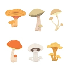 Mushroom nature cook food different kinds of vector