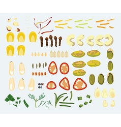 Set of 23 spices and nuts vector