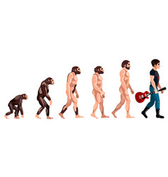 evolution from monkey to musician vector image vector image