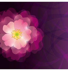 Abstract greeting or invitation card with purple vector image