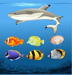 set of underwater fish vector image