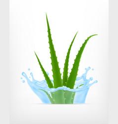 Aloe with water splash vector