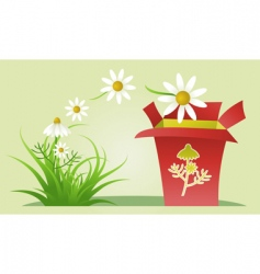 chamomile medicinal herb vector image