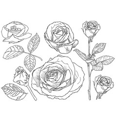 Black and white rose drawing set vector