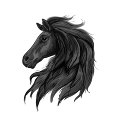 Black noble horse profile portrait vector