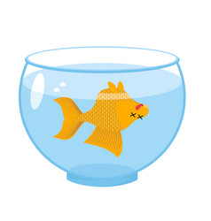 Dead gold fish in aquarium sea animal deceased vector
