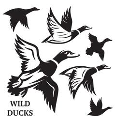 set flying wild ducks vector image