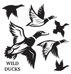 Set of flying wild ducks vector