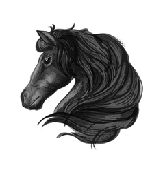 Black stallion horse head sketch vector