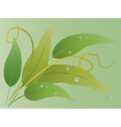Bouquet of green leaves with water drops vector