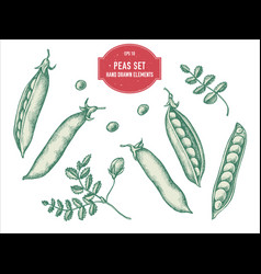 Collection hand drawn pastel peas vector