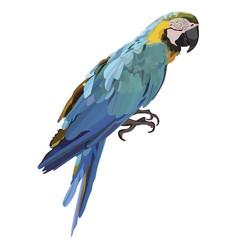 Colorful ara parrot vector