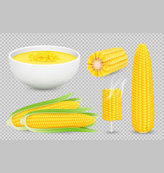 Corn collection realistic corn cobs vector