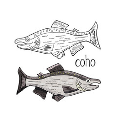 hand drawn coho fish black and white and color vector image